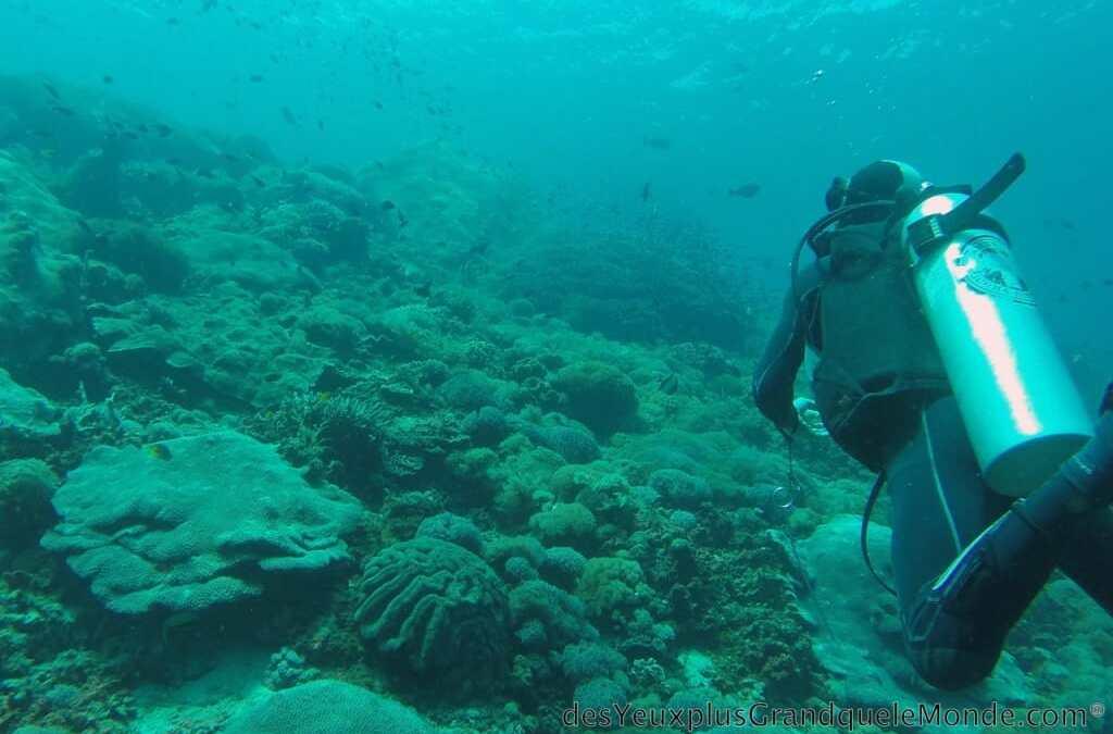 Apprendre la plongée à Bali : visite d'un autre monde