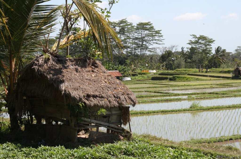 Bien se loger à Bali : à quoi faut-il penser ?