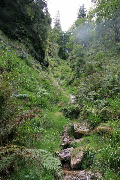 Autour de Corcieux - Dans la forêt au dessus du Lac de Lispach
