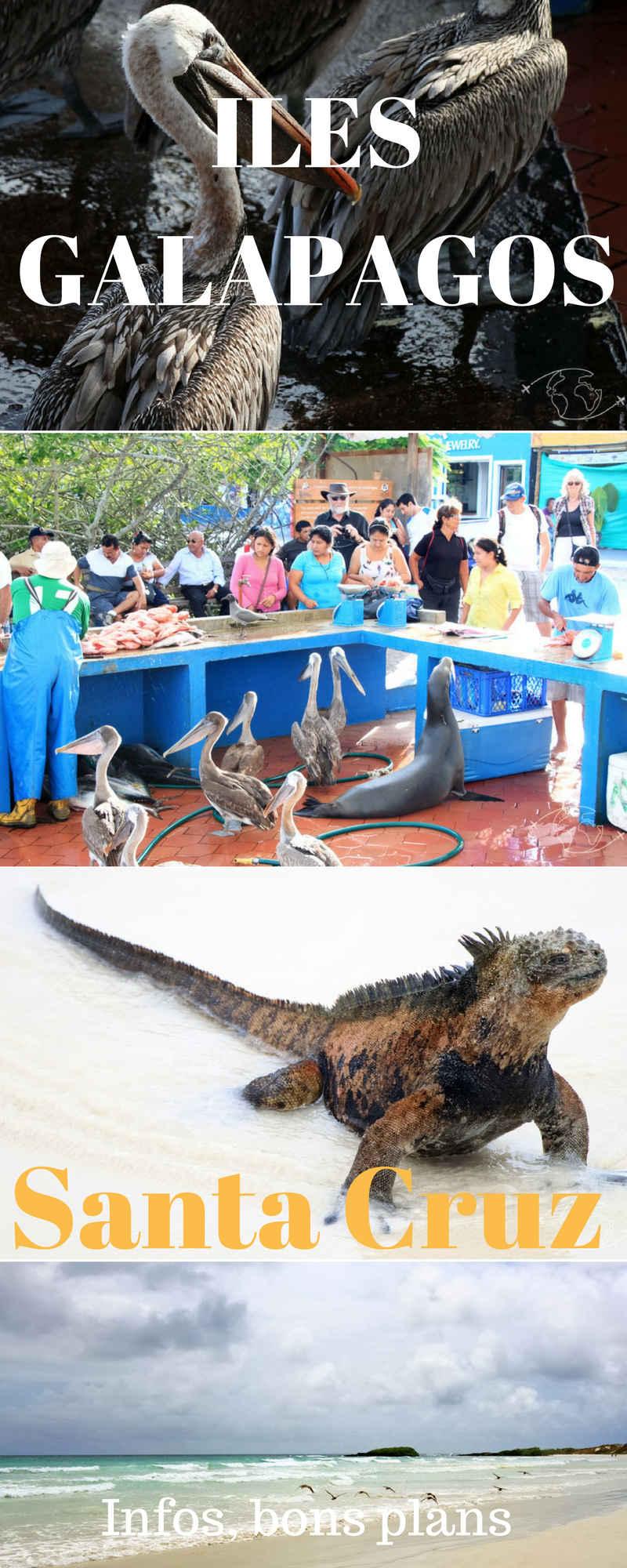 Visiter les Iles Galapagos, la réalisation d'un rêve de voyageur. Informations, bons plans, liens utiles et photos de mon séjour à Santa Cruz.