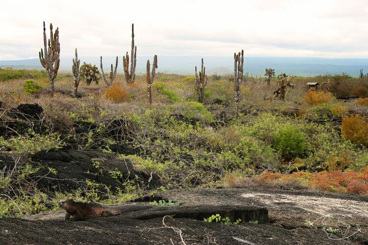 Visiter les Galapagos - Paysage de l'île Isabela