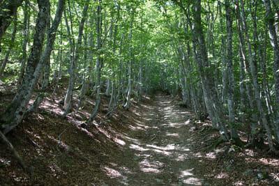 Chemin de Stevenson - Douceur des sous bois