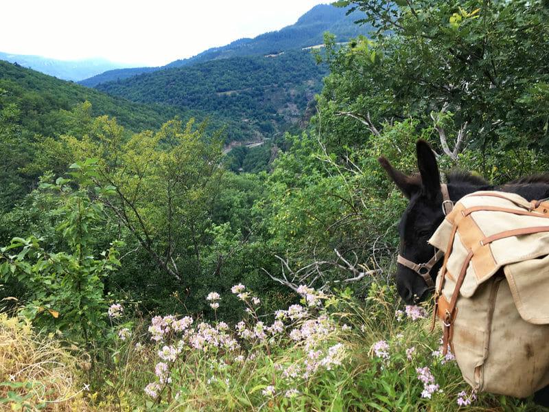 Chemin de Stevenson - Pablo après la montée de Florac vers Cassagnas