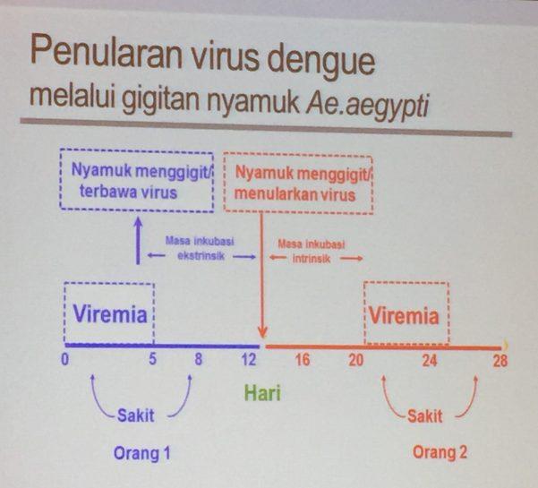 Penularan Virus DBD, Dengue, DBD, Penyakit