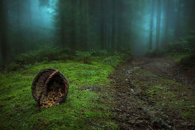 Amazing Photos of 20 Mysterious Forests From Around The World