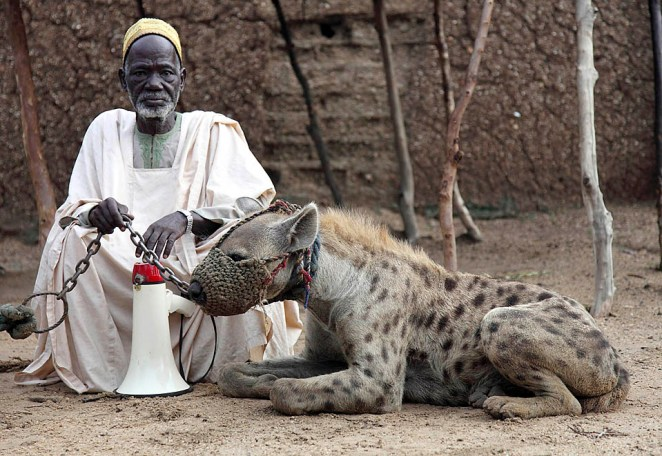 "A man poses with a hyena on a leash in Rinka village of Katsina State, North-west Nigeria, July 17, 2009. Debt collectors and entertainers in Nigeria use ""trained"" hyenas and baboons to threaten debtors, beg for money from motorists and pedestrians as well as charm enthusiasts. REUTERS/Akintunde Akinleye (NIGERIA ANIMALS SOCIETY)"