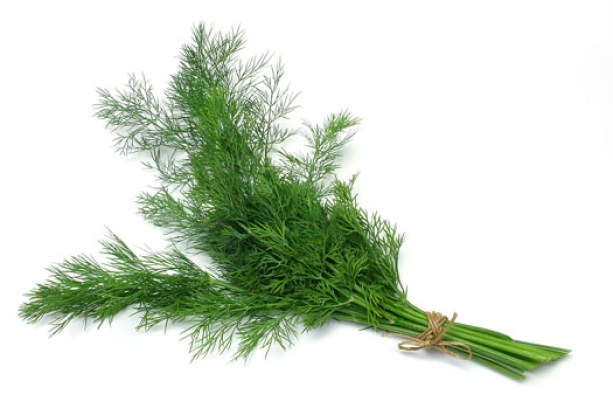dill-herb