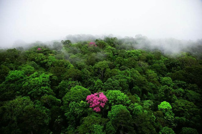 pink-ebony-on-the-kaw-mountain-french-guiana