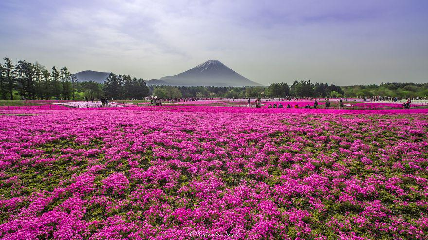 Here are 5 most Amazing Places in Japan You Should Visit
