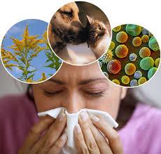 Obat Herbal Tradisional Untuk Penyakit Alergi
