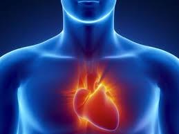 Obat Herbal Tradisional Untuk Penyakit Jantung