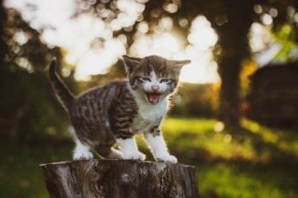 Arti Mimpi Melihat Kucing