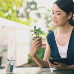 Realice un seguimiento del cuidado de su planta con uno de estos tres métodos