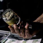 Cómo incursionar en la industria de la marihuana legal