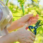 Cómo 'entrenar' a sus plantas para que crezcan mejor