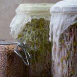 Cómo cultivar sus propios brotes en un tarro de cristal
