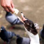 Alimentar a los patos es malo, en realidad (y qué hacer en su lugar)