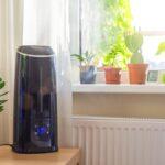 ¿Las plantas de interior realmente filtran su aire?