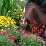 Cómo plantar un jardín de otoño (y el mejor momento para hacerlo)