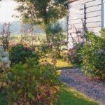 Tu patio trasero necesita un jardín con sombra