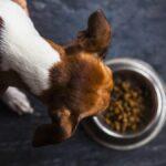 En serio, deshazte de estas marcas de comida para perros retiradas del mercado ahora mismo