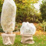 Cómo proteger su jardín durante el invierno