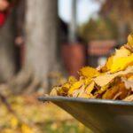 No tires las hojas muertas de tu césped (haz esto en su lugar)