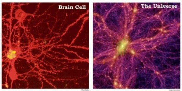 Descoperiri recente! Creierul se modelează în funcție de ceea ce gândim, simțim și facem! Gândirea pozitivă întărește sistemul imunitar, mărește energia vitală, crește longevitatea!
