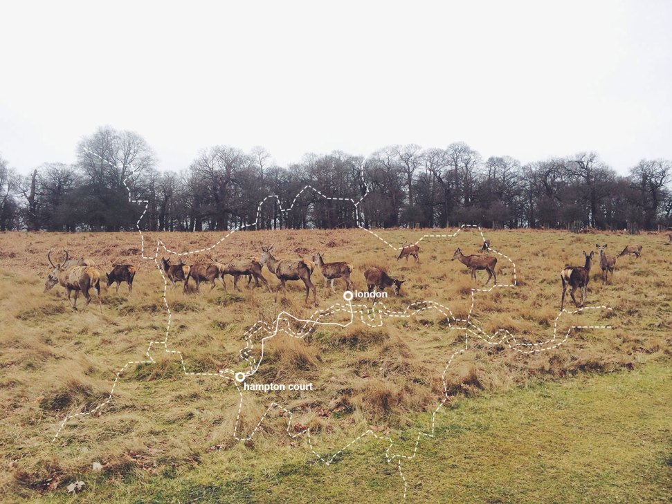 Deer-at-Richmond-Park-London-to-Hampton-Court-Map