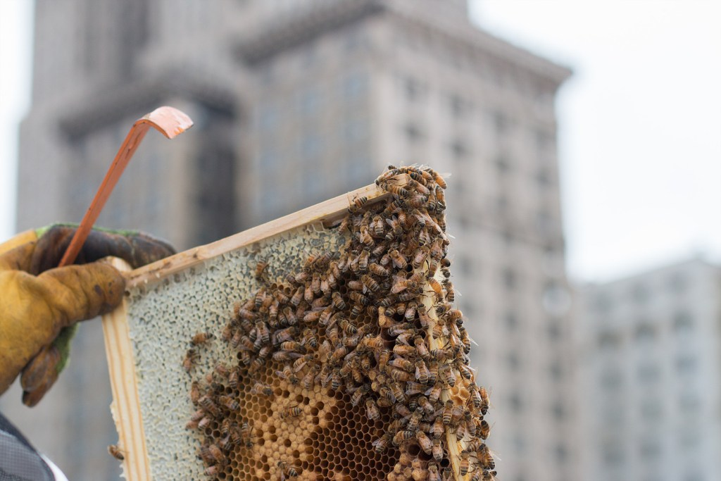 bee hive being held in front of city skyline