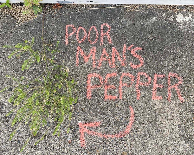 poor man's pepper