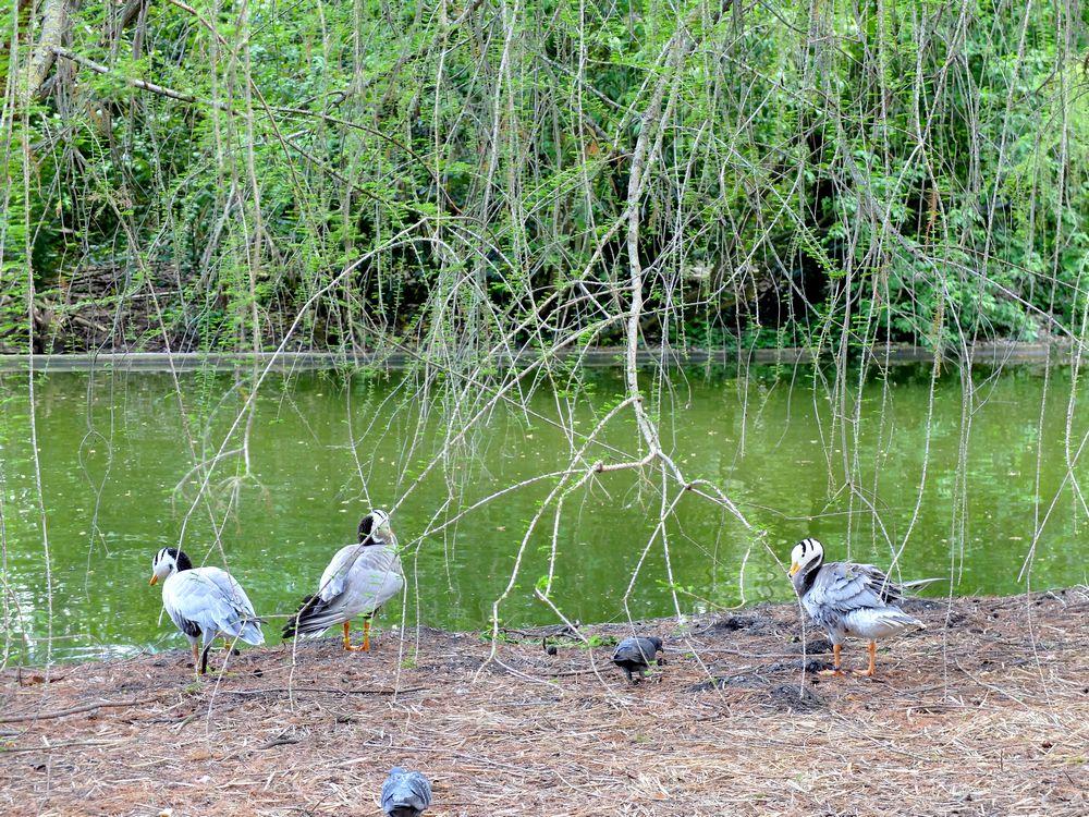 bordeaux-oiseaux-jardin-public_blog detours du monde
