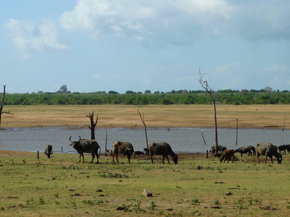 safari uda walawe sri lanka