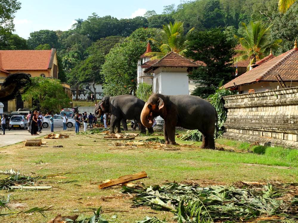 elephants kandy