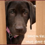Going on Vacation? What about your Dog?