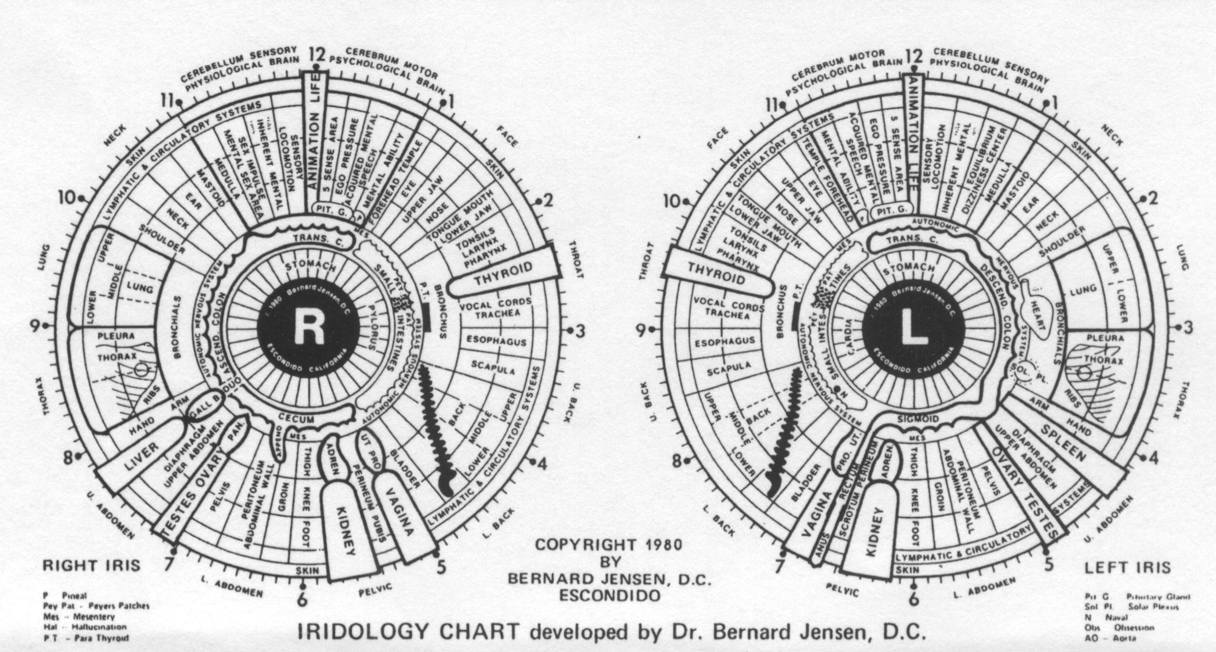 Basic Eye Chart Printable
