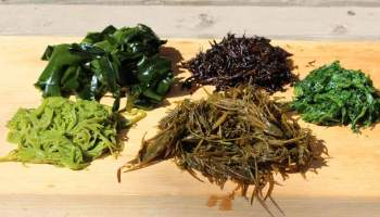 Introducing Dual Sea Moss and Bladderwrack Benefits - Detox