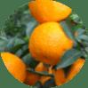 DetoxField растворимый напиток для похудения