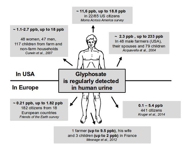 Image result for glyphosate effects