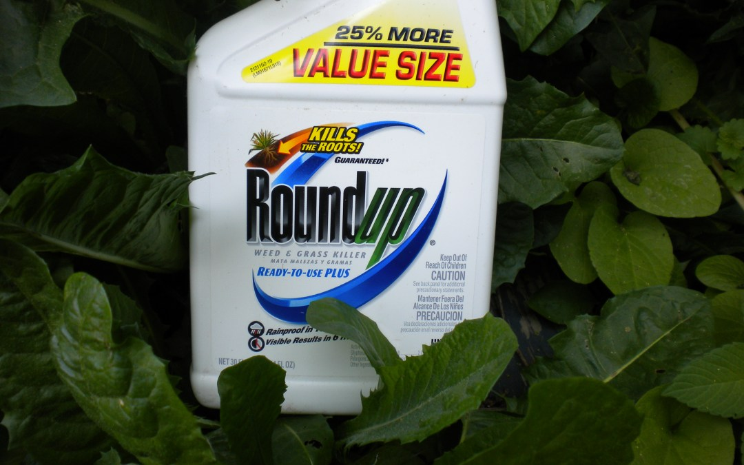 Monsanto weed killer can 'probably' cause cancer: World Health Organization