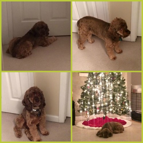 Christmas Dog Collage