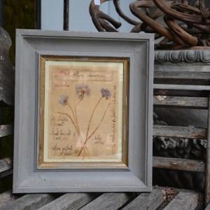 Officina Naturalis Framed Art 1