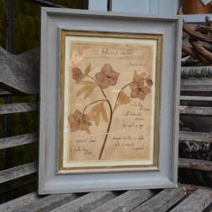 Officina Naturalis Framed Hellebore