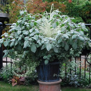 planted container