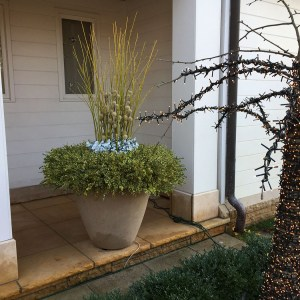 Winter Container with Yellow Twig