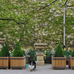 Ivy Wall with Orangerie Boxes