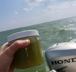 Algae samples in Lake Erie, Courtesy of Cleveland Water Alliance