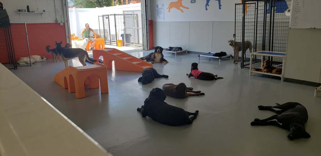 Canine to Five, lying around in Doggy Daycare