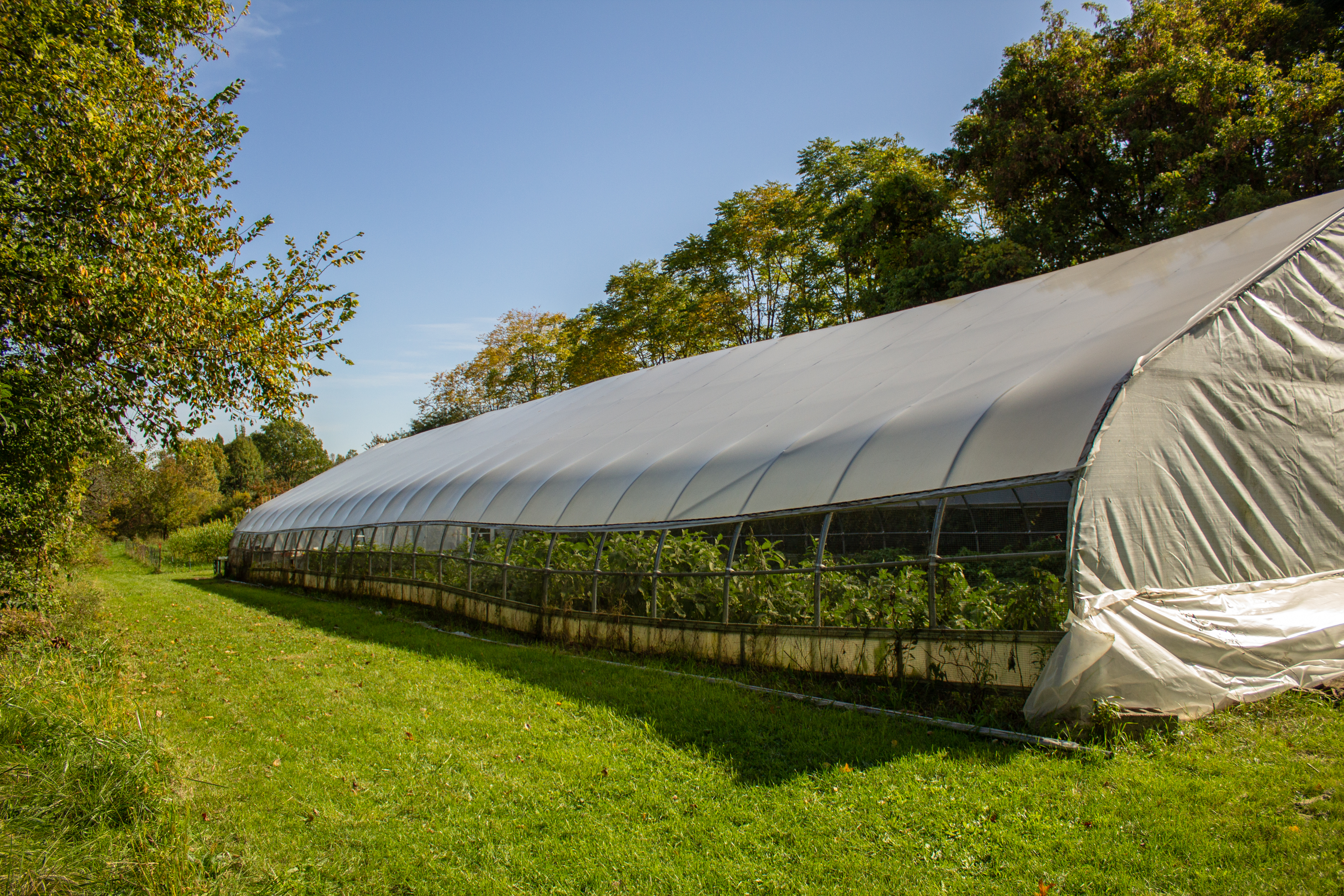 A GREENHOUSE IN ROUGE PARK ON DETROIT'S WEST SIDE. PHOTO JOHN BOZICK