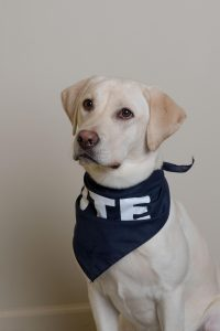 NORA'S OFFICIAL DTE HEADSHOT. PHOTO DTE